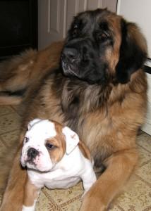 Leo & Bulldog