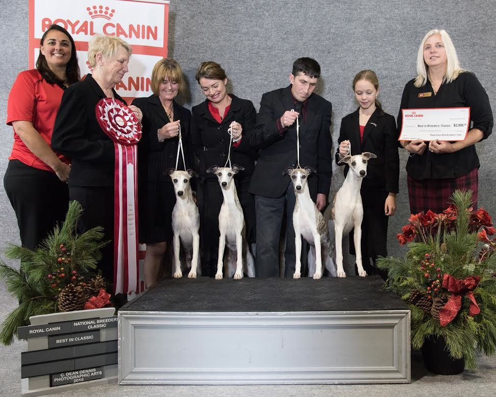 2015 Breeders' Classic Whippets